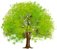 large green tree png clipart gallery yopriceville high