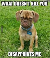 Frowning Dog Meme - frown for abi grumpy cat smile vs frown pinterest