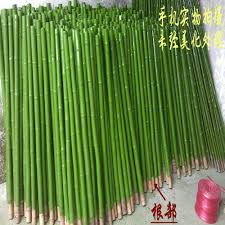Selling Home Interior Products Green Bamboo Poles Planted Along Wall W Polished Black Rocks In