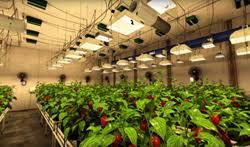 Indoor Garden Supplies - sunlight supply launches vr indoor gardening experience