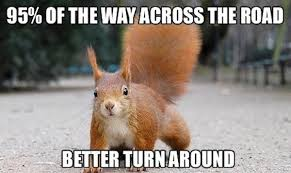 Dead Squirrel Meme - 13 funny squirrel photos and memes