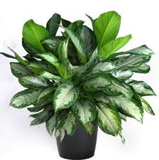 good houseplants for low light 9 easy to grow houseplants for low light