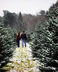 tree hunting the best places to cut down a christmas tree in the