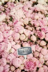 Peony Flowers by 109 Best Spring Flowers Images On Pinterest Pink Roses Pink