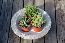 how to plant succulent bowls
