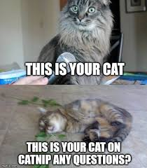 Any Questions Meme - this is your cat this is your cat on catnip any questions meme