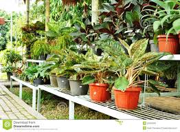ornamental plants shop royalty free stock photo image 20485055