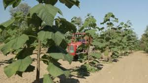 agriculturist cultivating land to remove overgrowing weeds on
