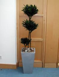 contract maintenance for interior office plants superplants