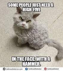 Mad Kitty Meme - fat cat memes cat breed selector funny cute angry grumpy cats