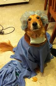 diy dog halloween costume dr nick the golden retriever dog halloween costumes