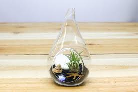 3 complete teardrop beach terrarium kits with air plants sand and sea