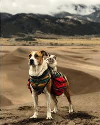 Colorado Traveling With Cats images Henry the colorado dog and adventure cat baloo jpg%3