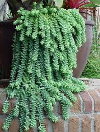 Our Favorite Plants How To 92 best hanging houseplants images on pinterest gardening