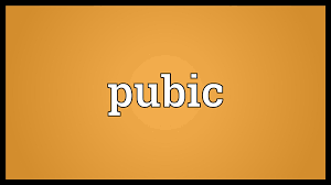 pretty pubic hair defined pubic meaning youtube