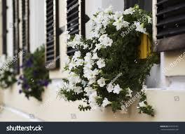 Beautiful Window Boxes Beautiful Flower Arrangement Petunias Vintage Window Stock Photo
