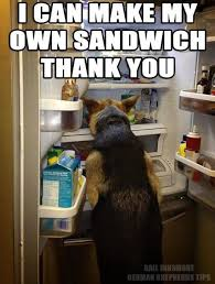 Make My Own Meme - i can make my own sandwich now where is the mayo german shepherd