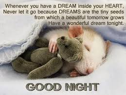 Goodnight Meme Cute - cute good night quotes messages for her him saying images