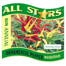 ornamental pepper masquerade wholesale bedding plants hybels inc