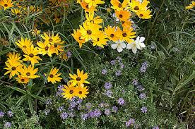 Fall Garden North Texas - north carolina botanical garden plants and gardening