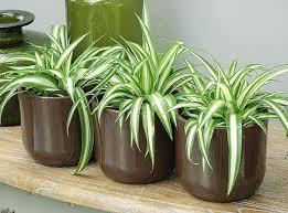 plantes d駱olluantes chambre des plantes aux vertus dépolluantes pour votre intérieur
