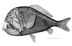 deep sea creature wikipedia