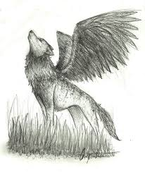 drawn wings wolf pencil and in color drawn wings wolf