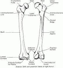 biology human anatomy images learn human anatomy image