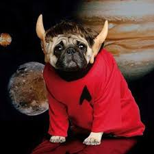 Halloween Costumes Dogs Cutest Puppy Costumes 2011 55 Dressed Dogs Images Animals Puppies