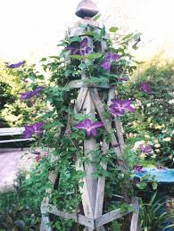 Rose Trellis Plans A Nice Architectural Support For Clematis I U0027d Like To Try This
