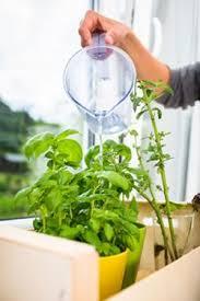 Indoor Container Gardening - indoor gardening techniques