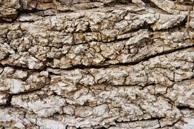 really grungy tree bark texture www myfreetextures 1500