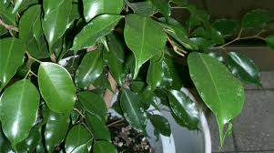 Green Plants 20 Indoor Plants That Can Improve Your Office Environment