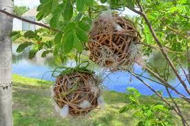 grapevine balls diy birdhouses diy grapevine balls for nesting birds