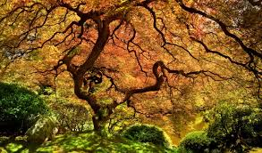 the 15 most beautiful trees in the world