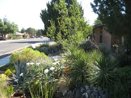 new mexico native plants xeriscaping extension master gardener