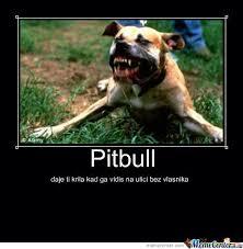 Pitbull Meme - pitbull by savijaca meme center