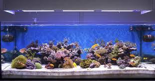 ideas types of aquariums