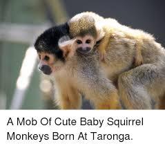 Mob Baby Meme - squirrel monkey meme monkey best of the funny meme
