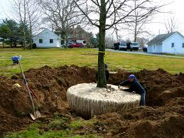 fruit tree garden layout download landscaping tree ideas gurdjieffouspensky com