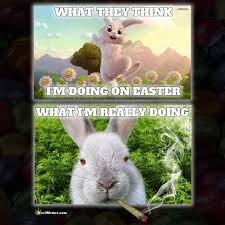 Funny Rabbit Memes - stoned easter bunny happy easter weed memes weed memes