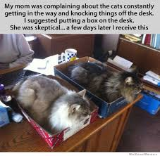 Cat Sitting Meme - fact cats can t resist sitting in boxes weknowmemes