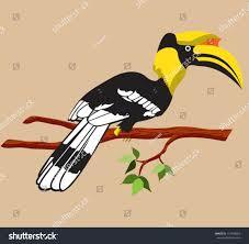 hornbill vector stock vector 157458050 shutterstock