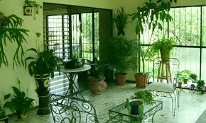 home interior plants choosing the right indoor plants for your home