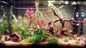 Led Aquarium Lighting Best Led Aquarium Lighting 2017 Reviews Top Picks U0026 Guide