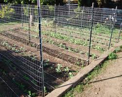 marvelous chicken wire trellis photos wiring schematic ufc204 us