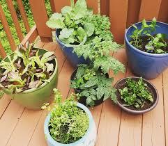 Vegetable Container Garden - how to grow a container garden diy home health
