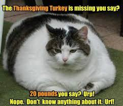 Funny Cats Meme - 7 cute funny and awesome cat memes for thanksgiving