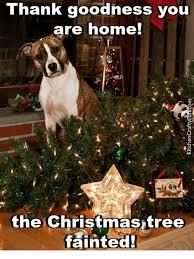 Christmas Dog Meme - thank goodness you are home the christmas tree fainted meme on me me