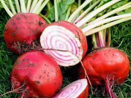 you can still plant a summer vegetable garden hgtv